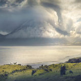 Sheep in Icelandic nature