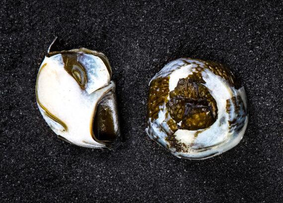 Food Sculpture - Fermented Sea