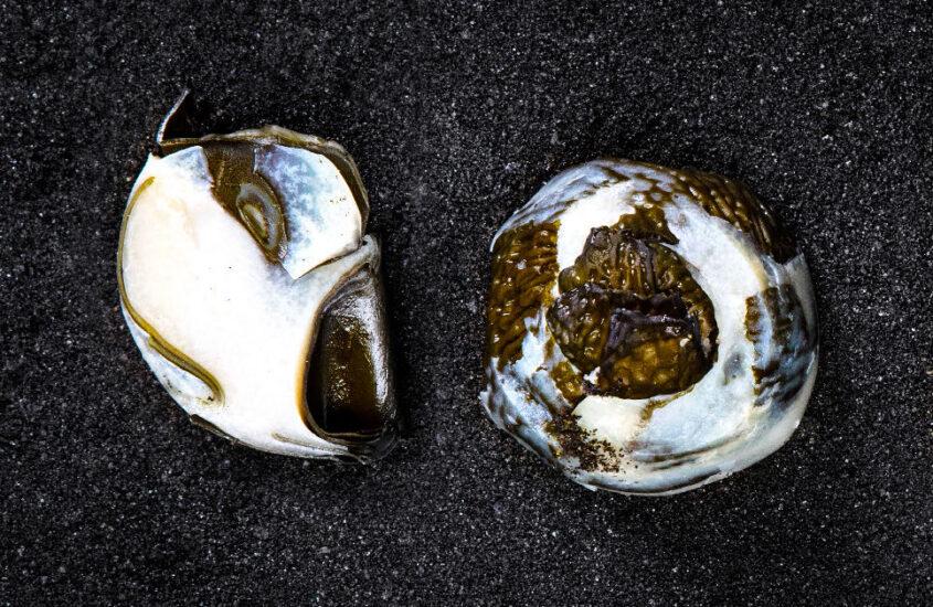 Fermented sea